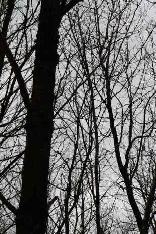 'My Deep Forest II' | Gottfriedland (2014) Photographie, 120x80 cm, Unikat