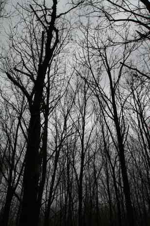 'My Deep Forest I' | Gottfriedland (2014) Photographie, 120x80 cm, Unikat